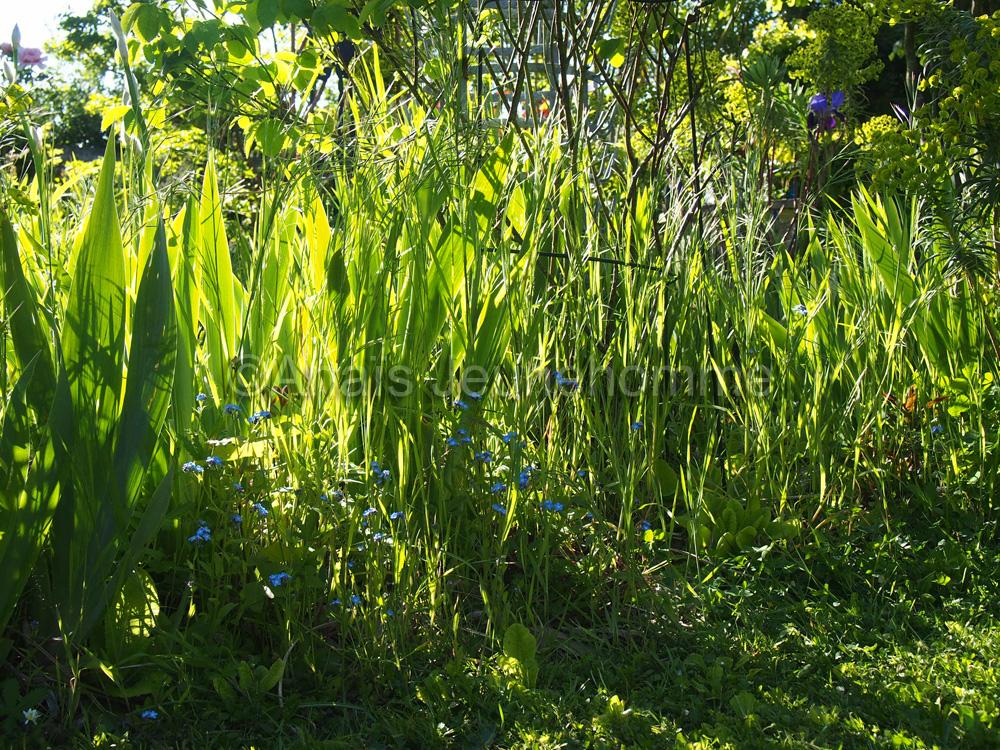 Jardin de la Parmélie