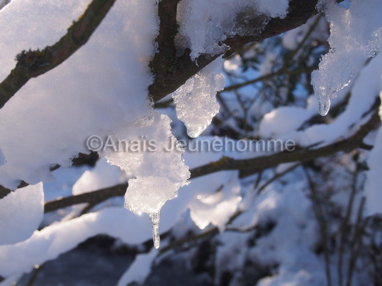 Gel et dégel branchu