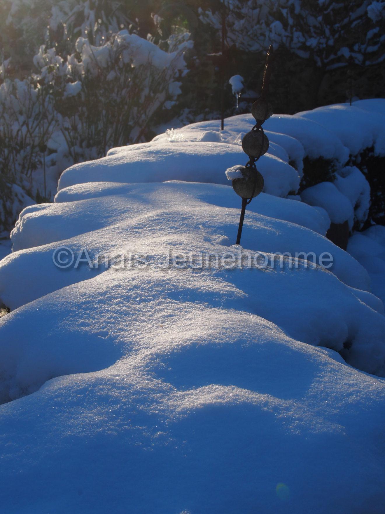 Couvertine de neige sur les buis
